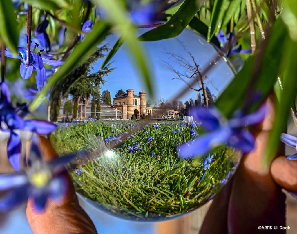 Blausterne blühen im Botanischen Garten Karlsruhe, gesehen durch eine Glaskugel.  Foto Copyright: ARTIS-Uli Deck