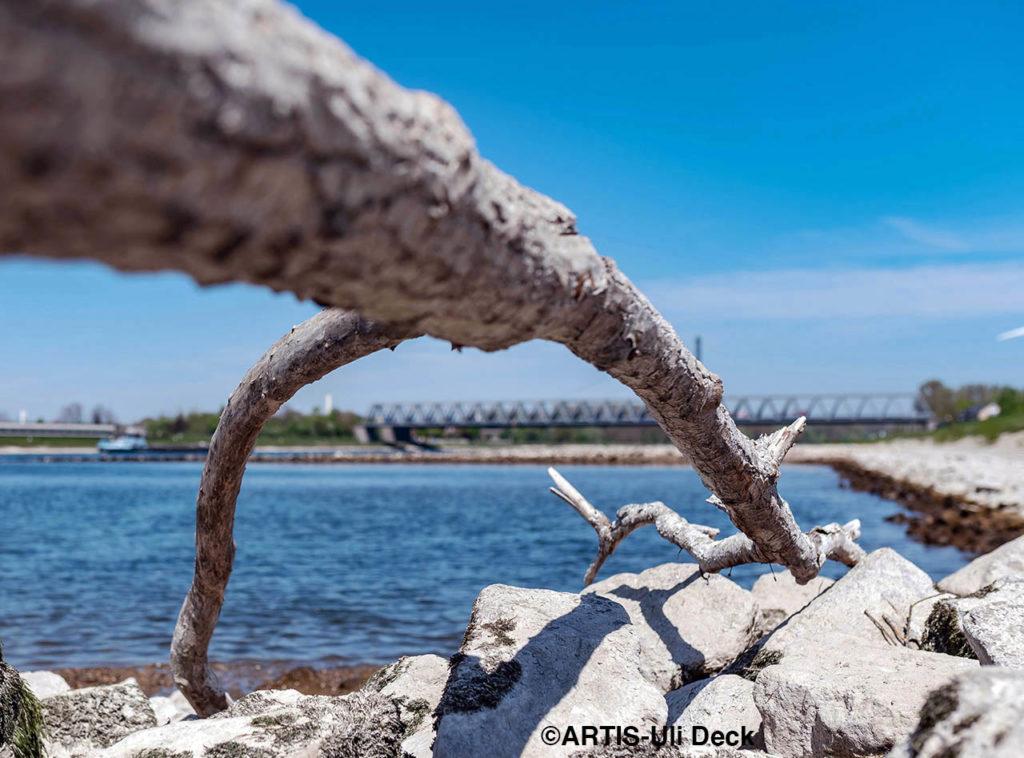 Am Rhein bei Karlsruhe Maxau liegt an einer Buhne das Geäst eines Baumes. Foto COPYRIGHT: ARTIS-Uli Deck